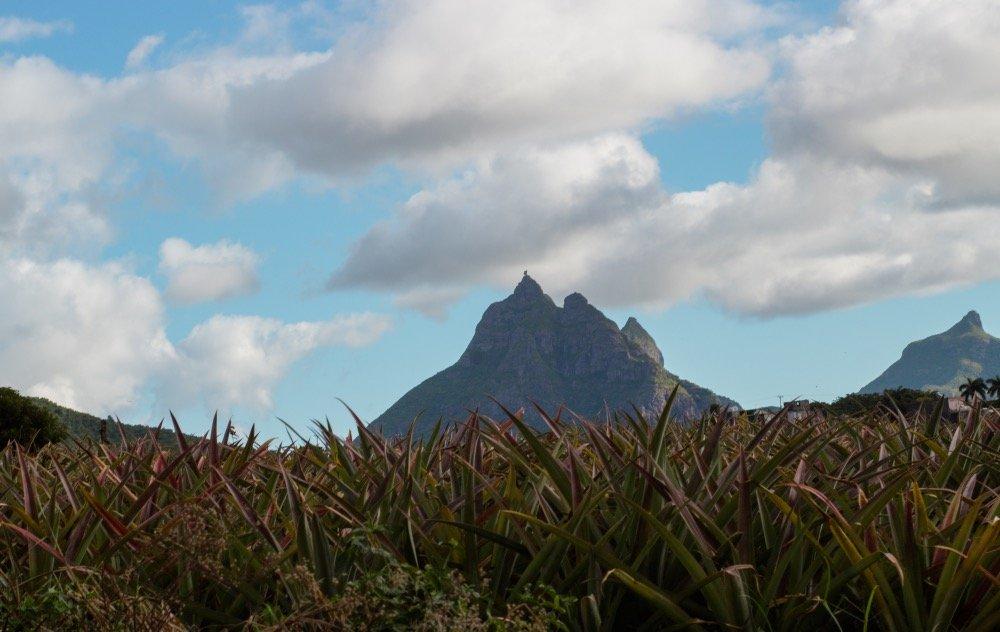 Green mountain Mauritius - Les Mariannes
