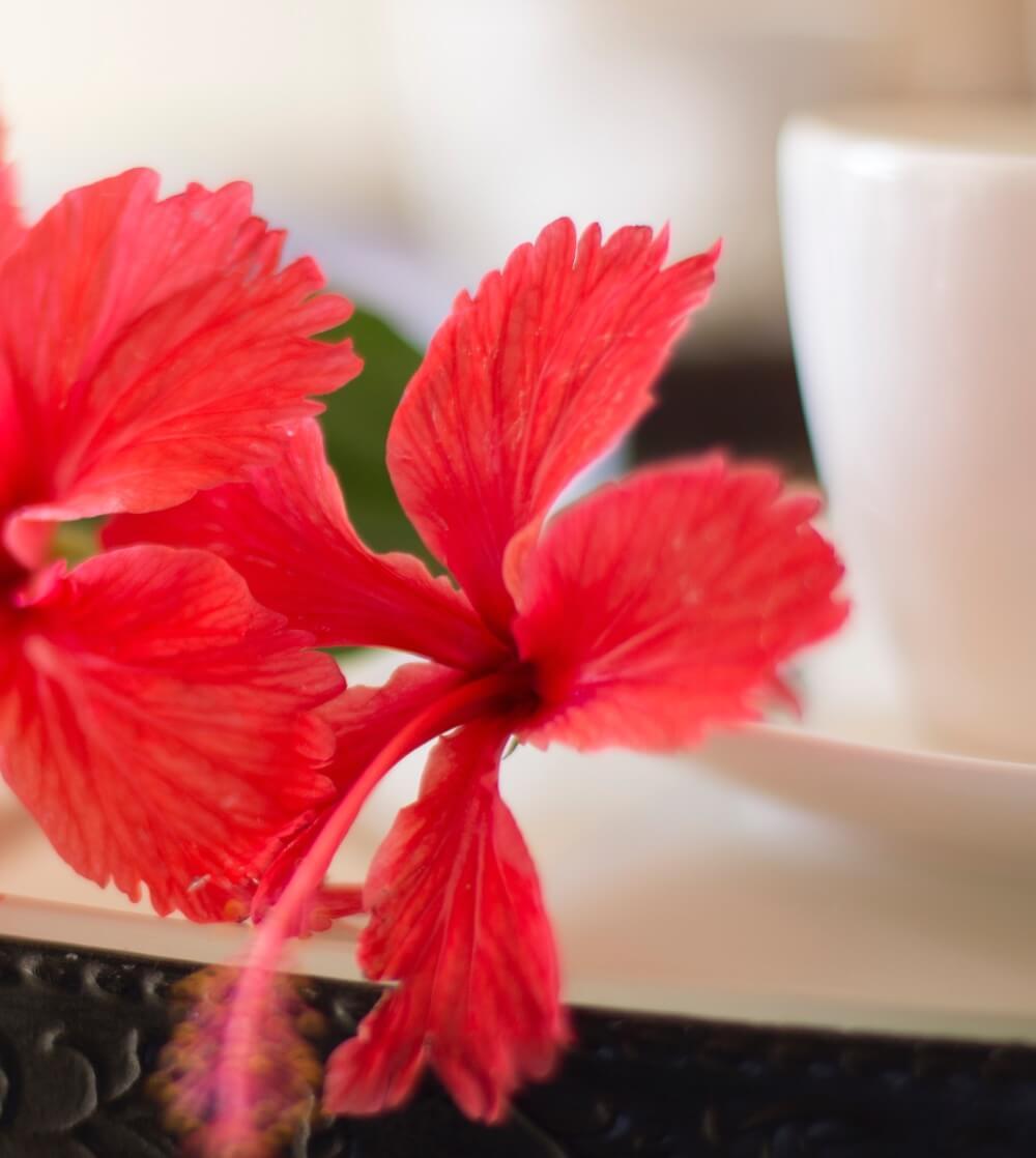 Red flower coffee mug - Les Mariannes